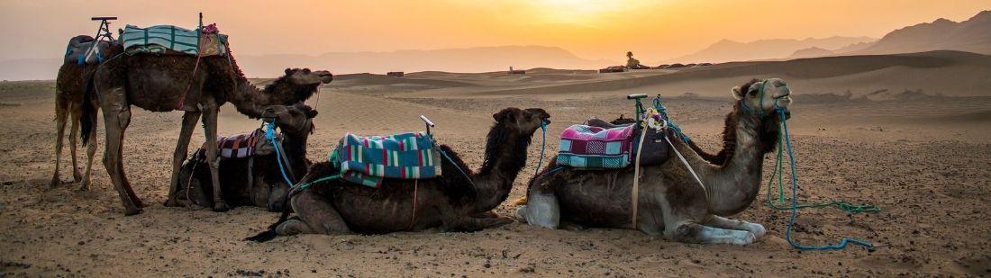 Desierto de Zagora | Portada