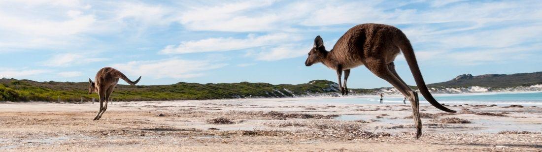 Kangaroo Island portada