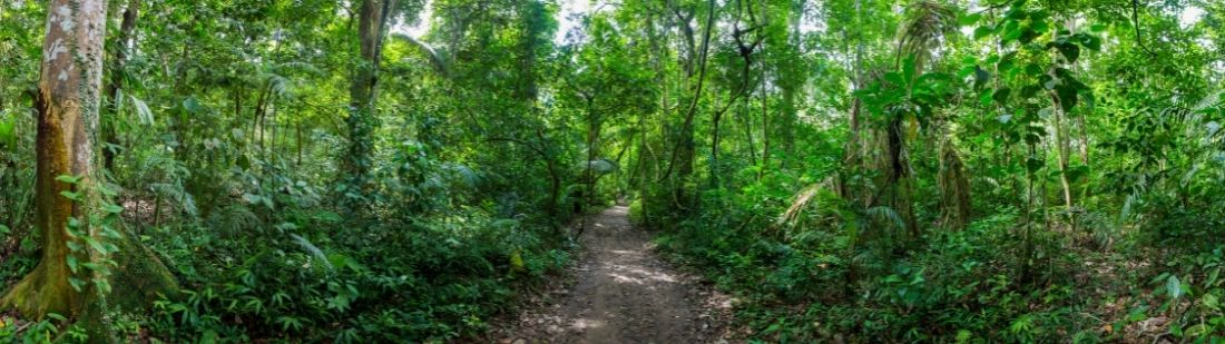 Parque Nacional Madidi portada
