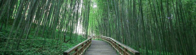 bosque de bambú portada