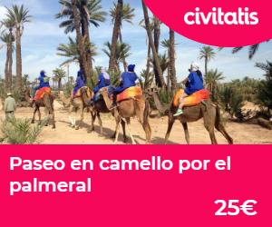 donde alojarse en marrakech  camello palmeral