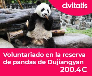 reserva pandas chengdu voluntariado