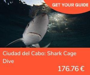 Nadar con tiburones en Sudáfrica - Ciudad del Cabo jaula tiburones