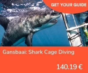Nadar con tiburones en Sudáfrica - Gansbaai