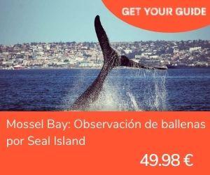 Nadar con tiburones en Sudáfrica - Mossel Bay ballenas