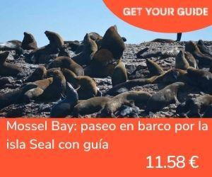 Nadar con tiburones en Sudáfrica - Mossel Bay barco por isla Seal