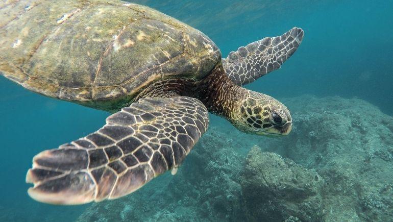 Buceo en Bohol: tortugas marinas en Balicasag