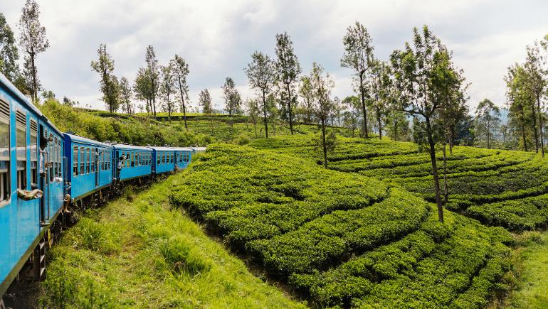 Tren desde Haputale a Ella o Kandy