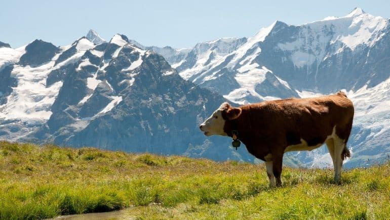 Curiosidades de Suiza: la carne es muy cara