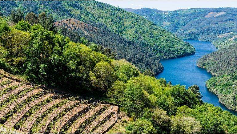 Ribeira Sacra, zona de producción de una de las bebidas típicas de Galicia