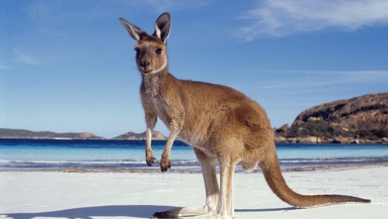 Kangaroo Island, un destino ideal para una luna de miel en Australia