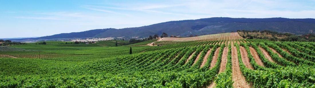 Vinos de Portugal | Portada